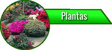 Portfolio Plantas